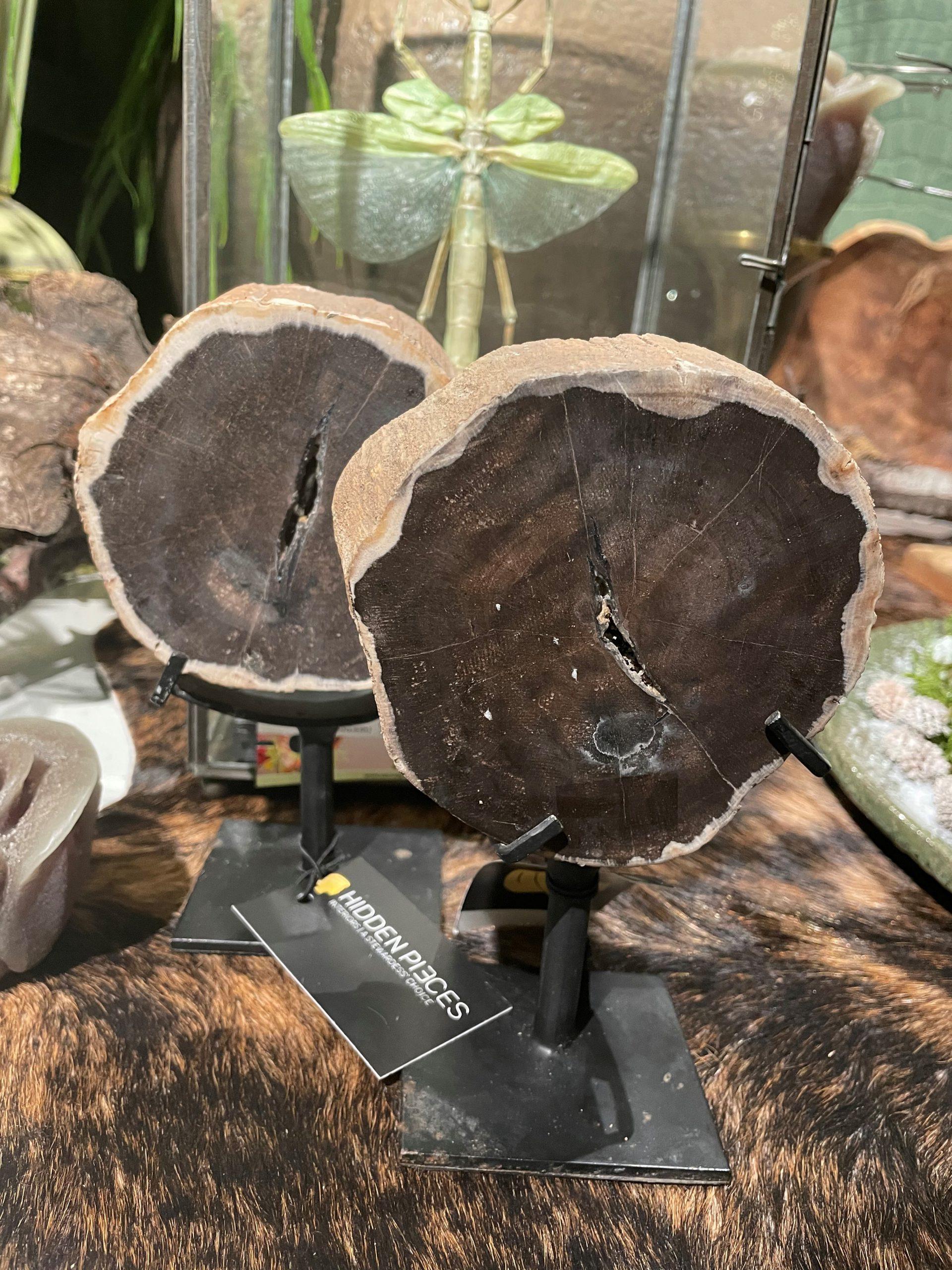 versteend houten ornamenten